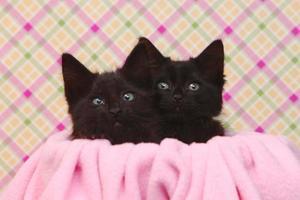 süße schwarze Kätzchen auf rosa hübschem Hintergrund foto