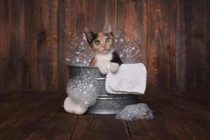 Kätzchen im Waschbottich werden mit Schaumbad gepflegt foto