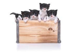 süße Kiste mit Kätzchen zur Adoption foto