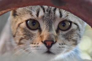 Nahaufnahme auf den Augen einer neugierigen Katze foto