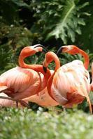 Geselligkeit mit Flamingos im Freien foto