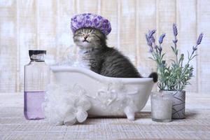 entzückendes Kätzchen in einer Badewanne zum Entspannen foto