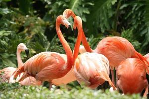 Flamingogruppe im Freien foto