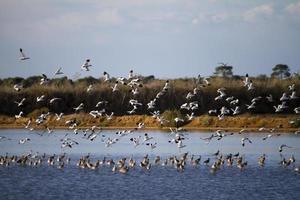 Vogelschwarm fliegt foto