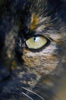 Detail des Katzenauges foto