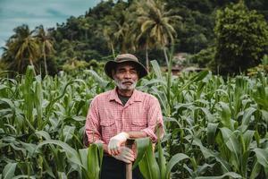 älterer Bauer, der im Maisfeld steht foto