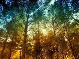Holzbäume im Freien foto