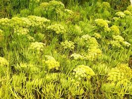 Outdoor-Pflanze im Garten foto