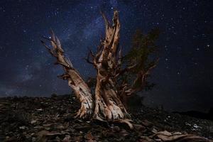 hell gemalte Sternenlandschaft in Bristlecone-Kiefern foto