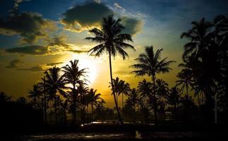 die Schönheit der Aussicht auf Palmen und den Fluss in den Reisfeldern foto