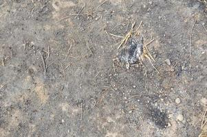 verbrannte Textur der verbrannten Erde nach dem Lagerfeuer foto