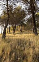 Schatten der Bäume im Wald foto