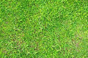 grünes Gras Textur für den Hintergrund. grünes Rasenmuster und Texturhintergrund. foto