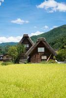ländliches gebiet in japan mit traditionellen holzhäusern und reisfeldern. shirakawa gehen, japan foto