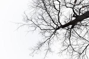 seltsam aussehende tote Bäume in einem reinen Hintergrund foto