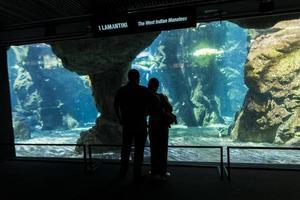 Genua, Italien, 2. Juni 2015 - unbekannte Personen im Aquarium von Genua. Das Aquarium von Genua ist das größte Aquarium Italiens und gehört zu den größten in Europa. foto
