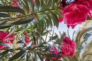 tropischer Hintergrund von unten auf die Zweige einer großen Palme foto