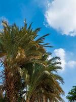 Palmen gegen blauen Himmel foto