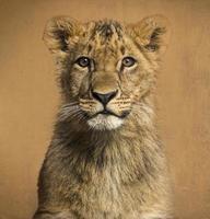 Nahaufnahme eines Löwenjungen, Weinlesehintergrund