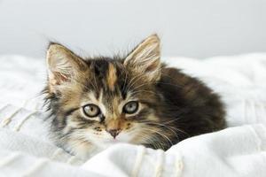 süßes getigertes Kätzchen, das auf der Bettdecke sitzt foto