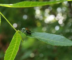 Käfer foto