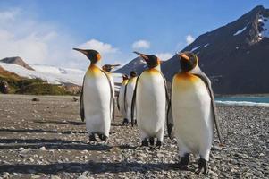 Pinguin-Paradies foto