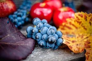 frische reife Trauben bei der Herbsternte foto