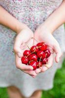Hände voller Süßkirschen
