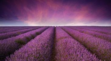 atemberaubender Sommer Sonnenuntergang der Lavendelfeldlandschaft foto