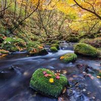 schöner Wasserfall im Wald, Herbstlandschaft