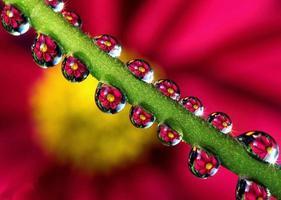 Blume im Wassertropfen foto