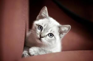 unschuldiges Kätzchen foto