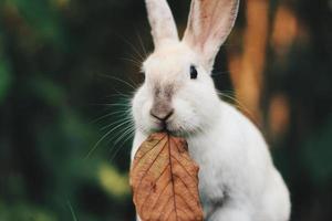 conejo en día de pascua foto