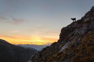Silhouette der Gämse in den Bergen.