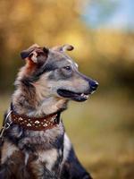 Porträt eines Hundes.