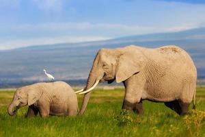 afrikanische Elefantenmutter mit ihrem Kalb im Sumpf