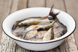 Flussfisch in einem weißen Becken mit Wasser foto