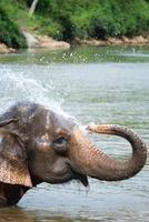 ein asiatischer Elefant foto