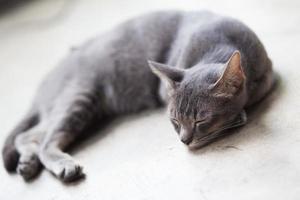 süße Katze foto