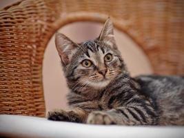 Porträt eines gestreiften Kätzchens auf einem Korbstuhl