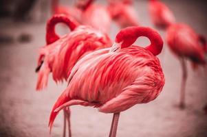 rosa Flamingos gegen grünen Hintergrund