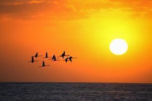 Flamingos fliegen bei Sonnenuntergang unter einer hellen Sonne