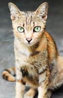 Katze (Haustier) foto