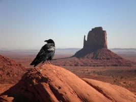 Krähe im Monument Valley foto