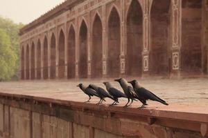 Humayuns Grab, Dehli, Indien