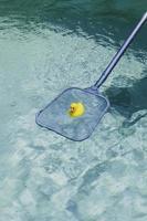 Gummiente im Pool foto