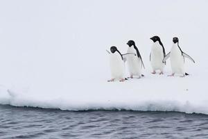 Gruppe von Adeliepinguinen auf dem Eis in der Nähe von offenem Wasser