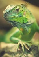 Reptil foto