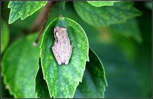Insekten und Reptilien und Makro