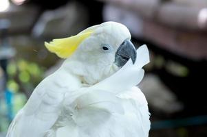 weißer Papagei foto
